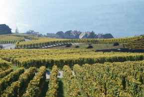 Szwajcaria - wyjazd winiarski