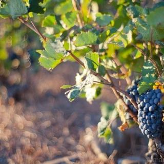 Wino w starożytności