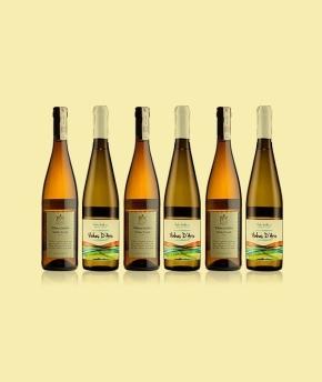 Pora na vinho verde 2013