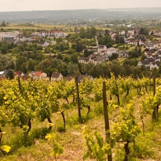 Winnice Rheingau