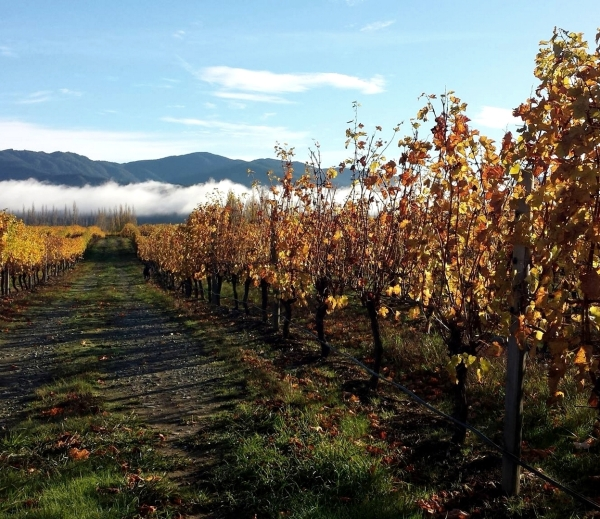 Konrad Winery