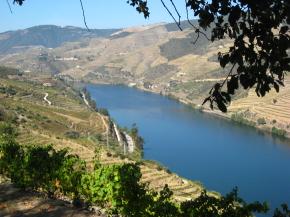 Wino Portugalia