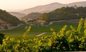wina kalifornijskie
