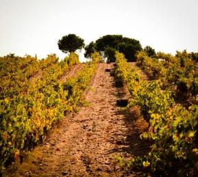winnice w toro
