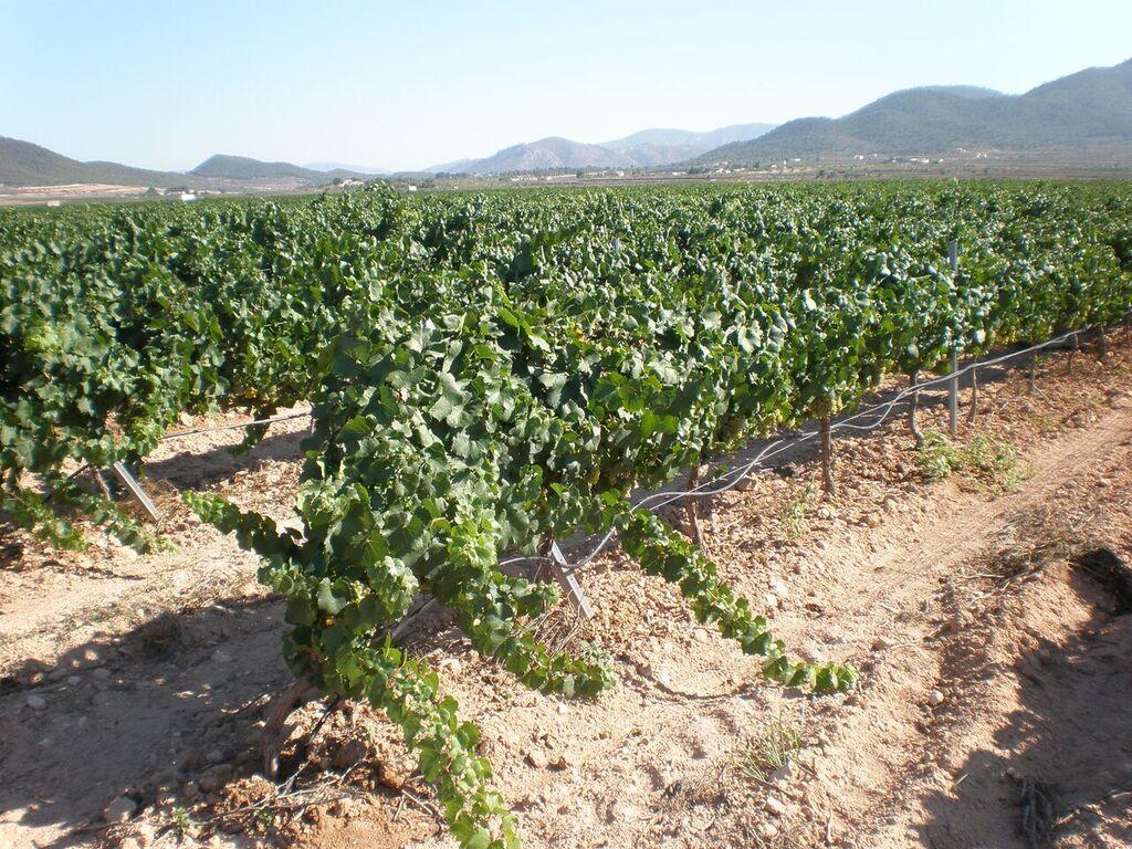 winnice w hiszpanii