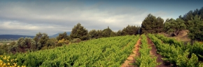 winnice corbieres