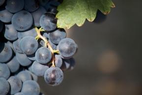 Wino Hiszpańskie La Legua