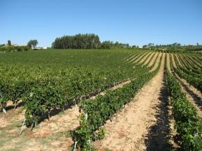 winnice portugalii