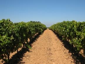 winnice bairrada