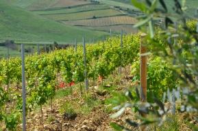 winnice vaccaro