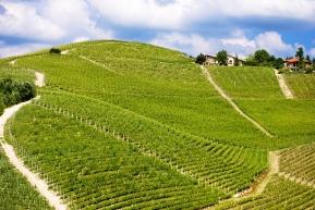 winnice włoskie