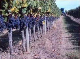 Winnice Bordeaux