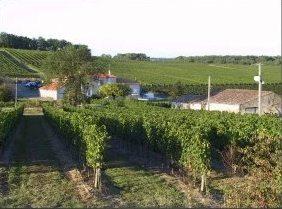 winnice francji