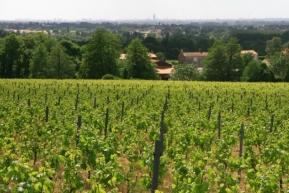 Winnice nad Loarą