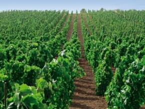 Winnice we Włoszech