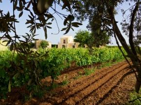Winnice Włochy