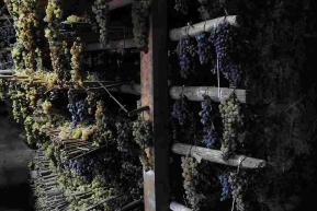 Podsuszanie winogron