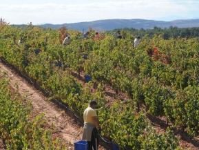 Winnice Hiszpania