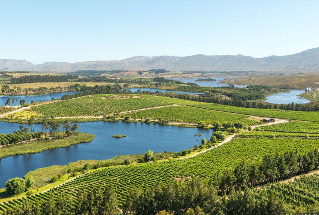 Winnice RPA