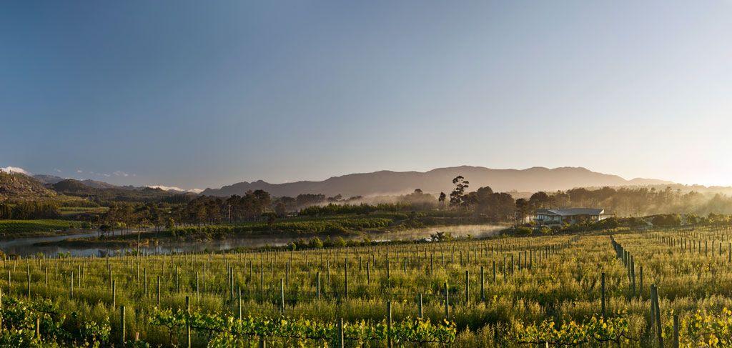 RPA winorośle