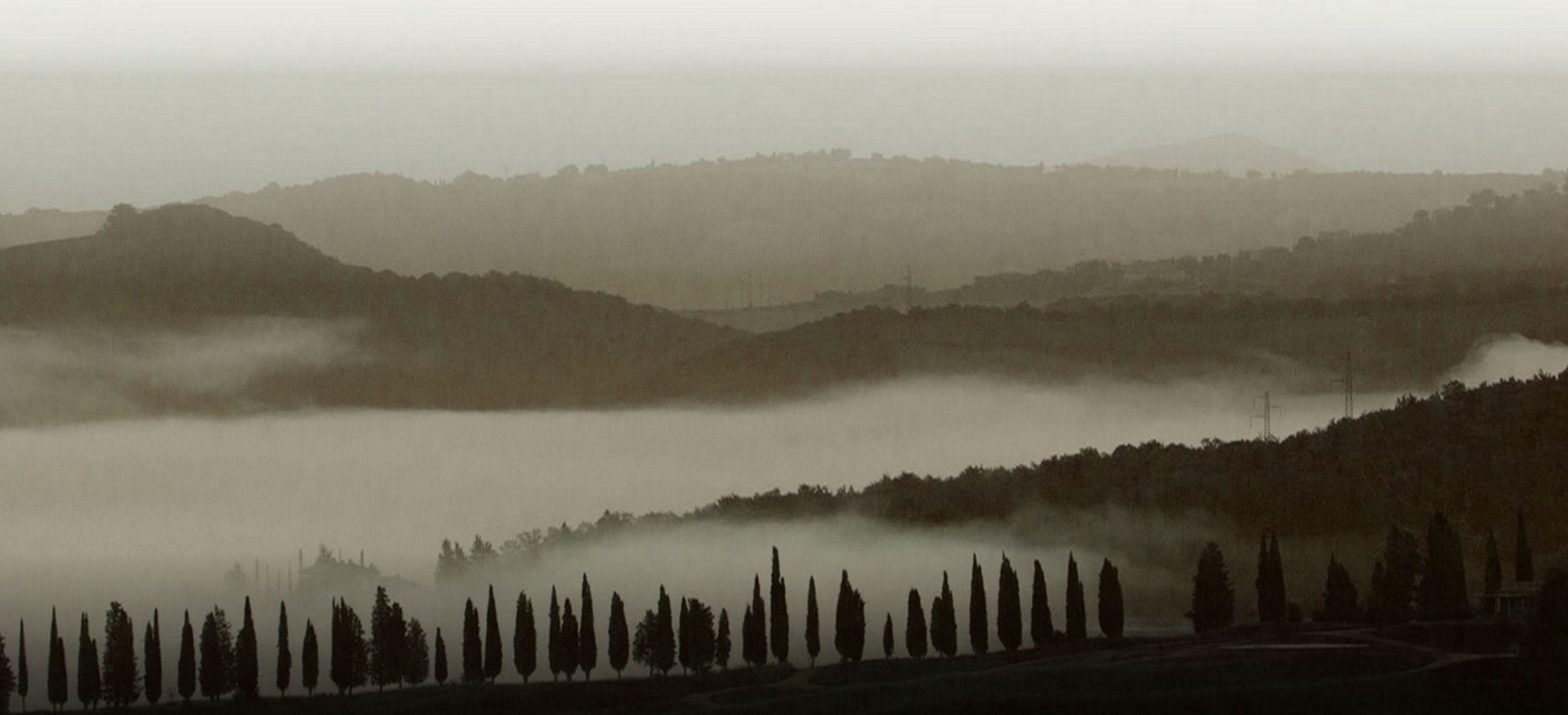 Mgła w winnicach