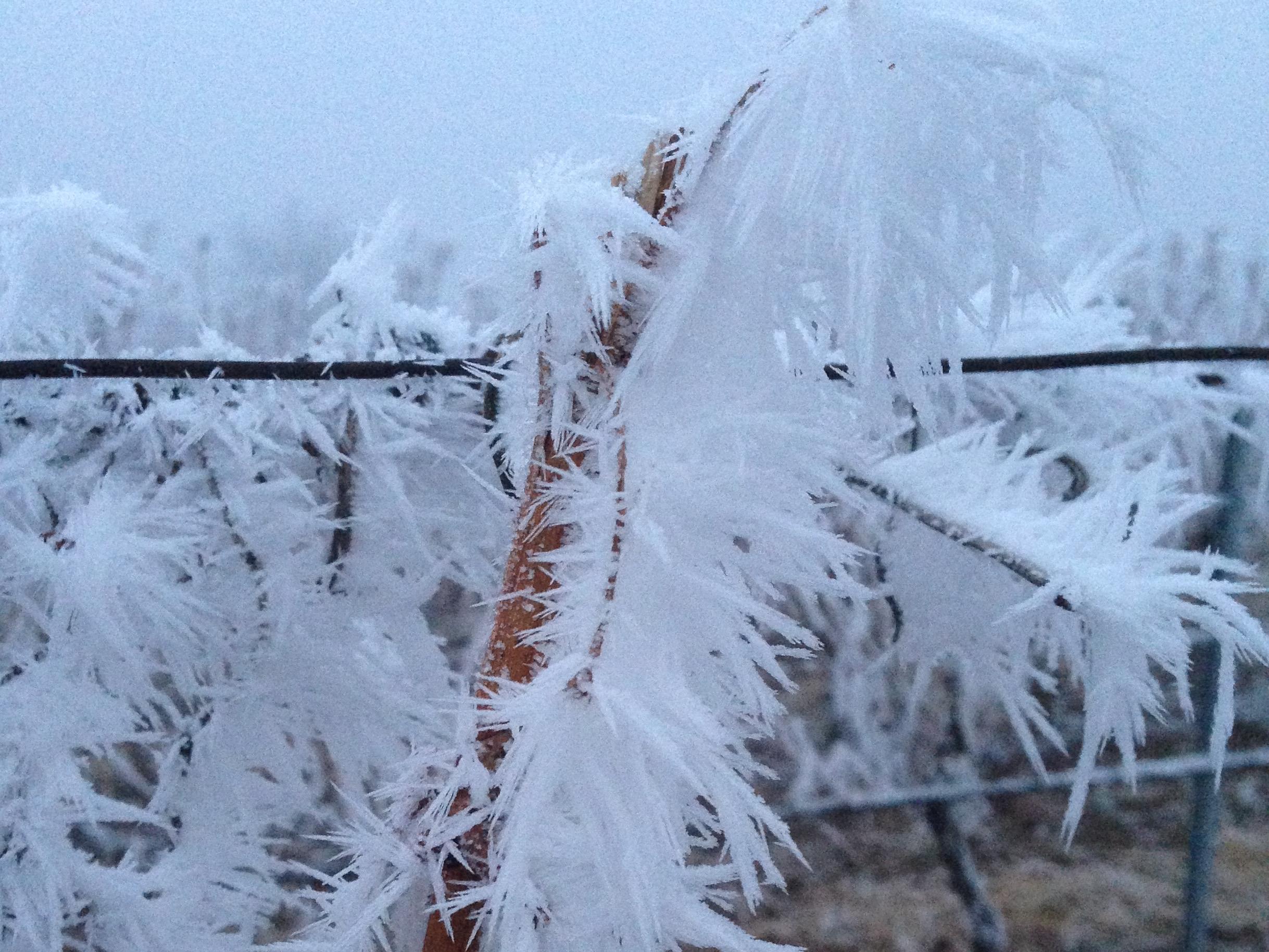 Winnice zimą