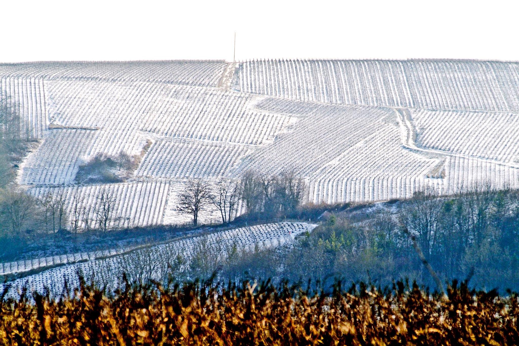 Winnice Szampanii zimą