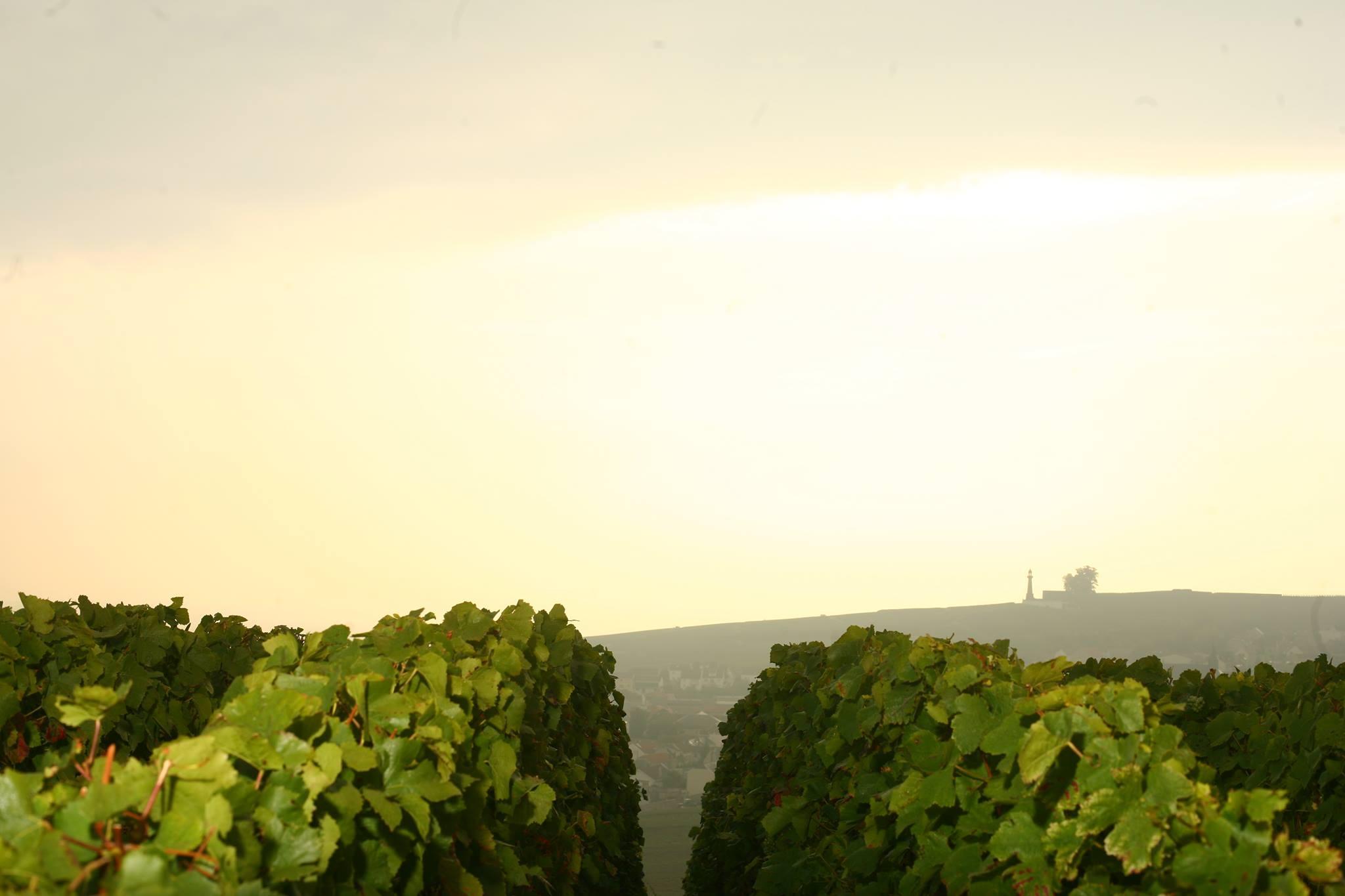 Winnice w Szampanii