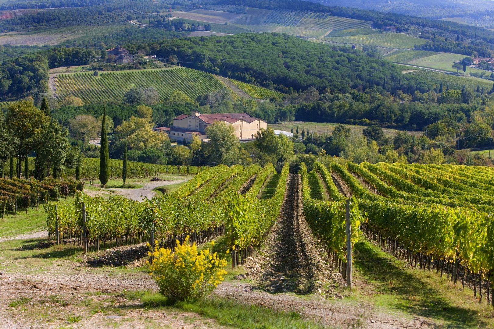 Winnice Chianti