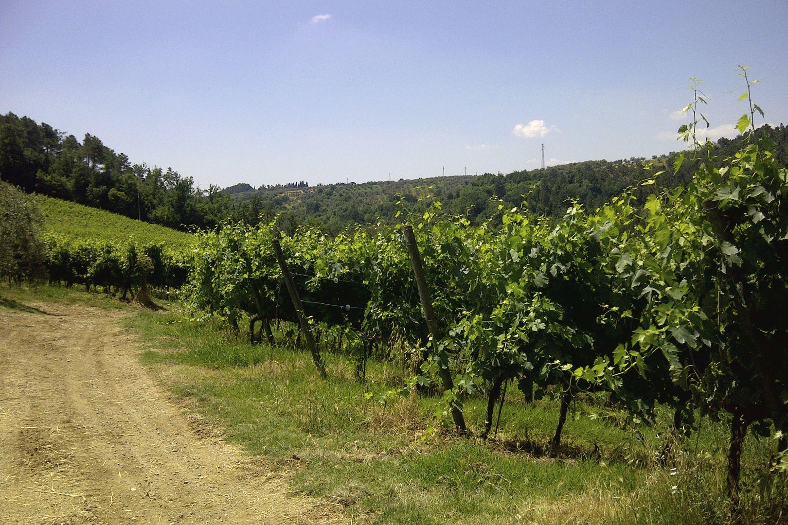 Winnice Toskanii