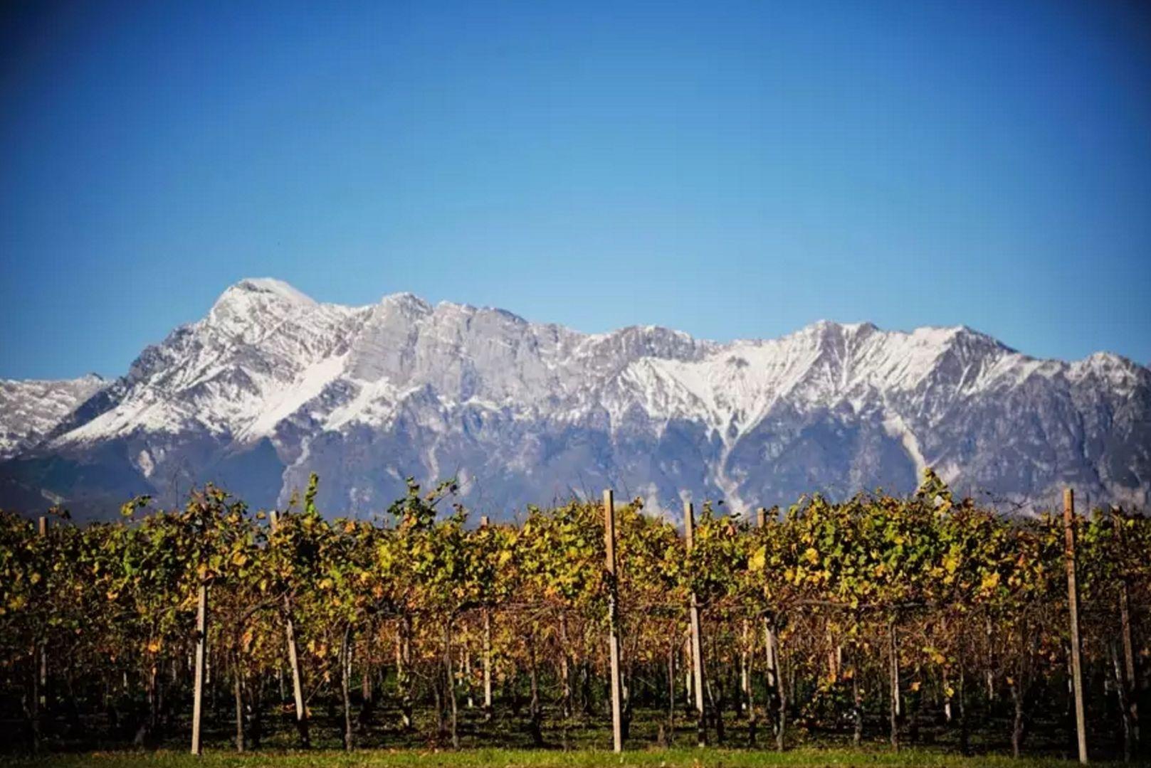 Winnice Friuli
