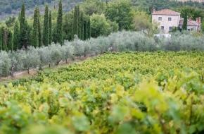 Altadonna winnice