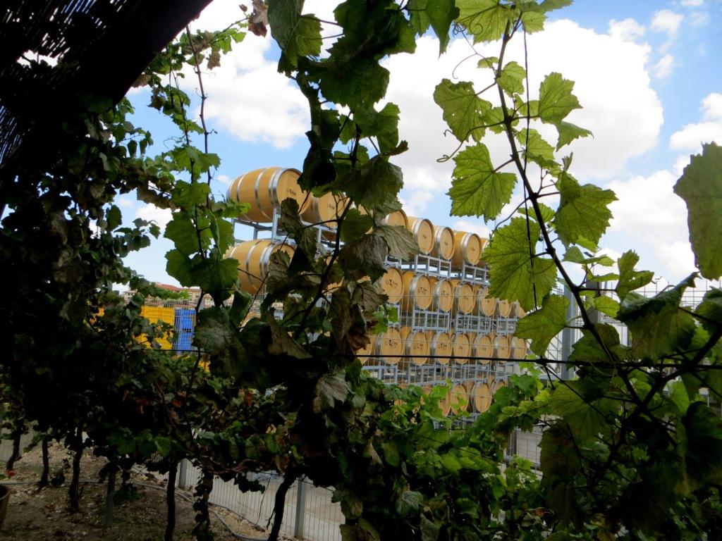 Izrael Tulip Winery winnica