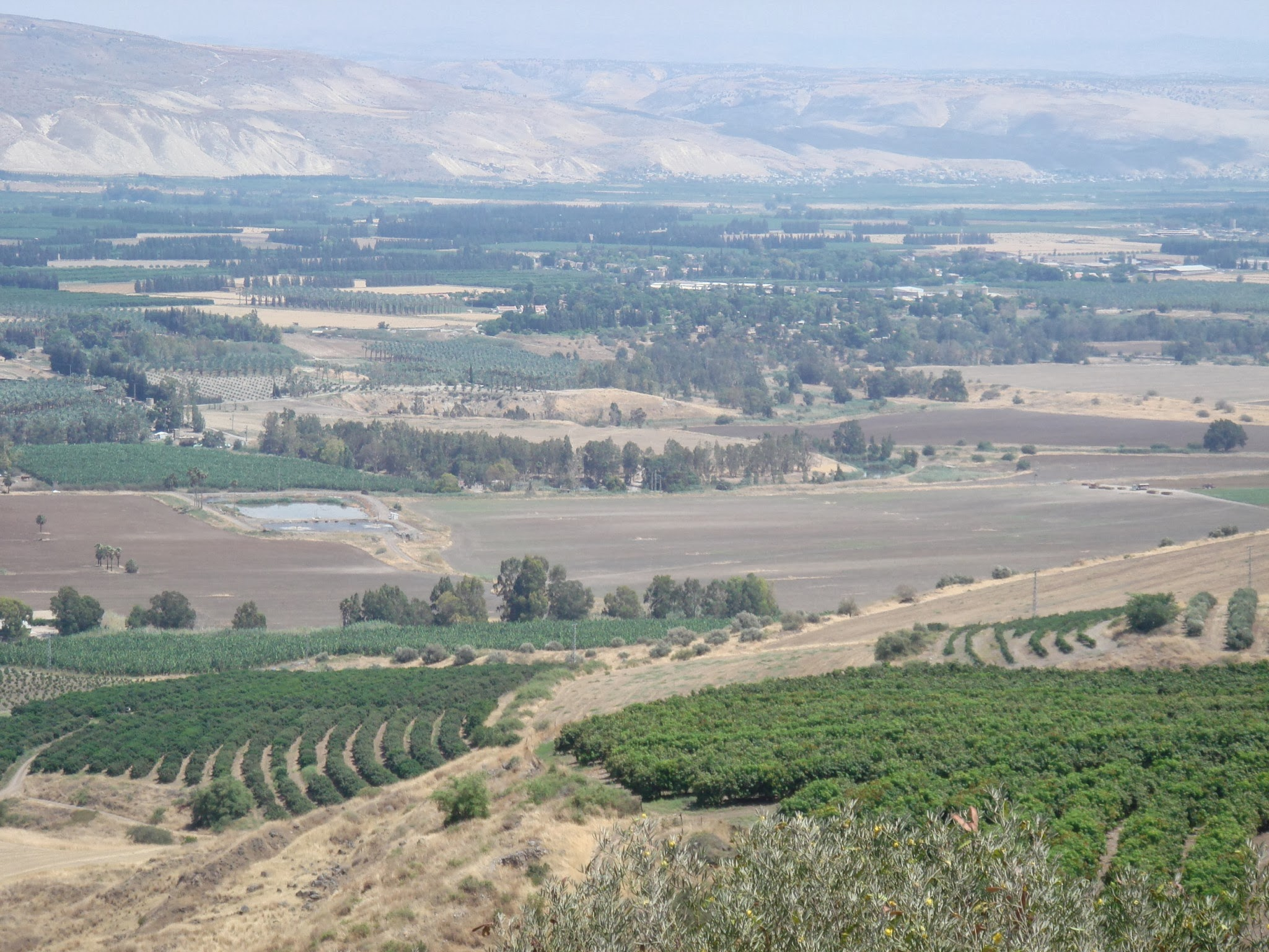 Izrael - winnice