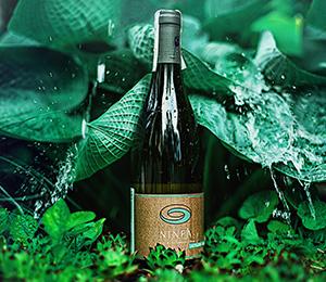 Sauvignon blanc: od Francji po Nową Zelandię