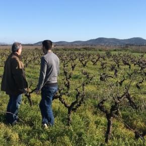 Widok na krzewy winorośli w winnicy 4 Kilos