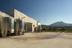 Widok na budynki produkcyjne na terenie winnicy 4 Kilos
